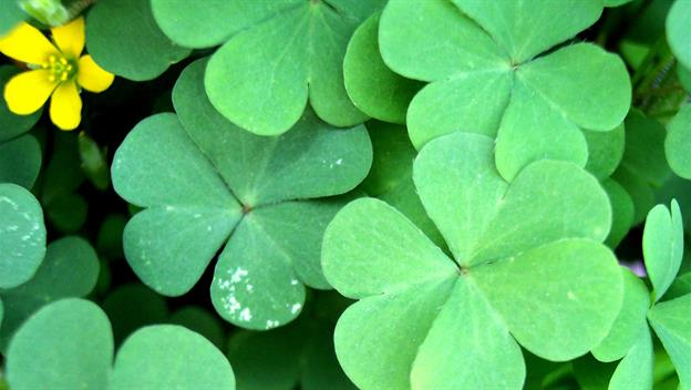 Happy St Patrick's Day, March 17th 2015