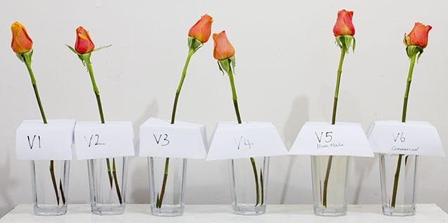 Flower-setup
