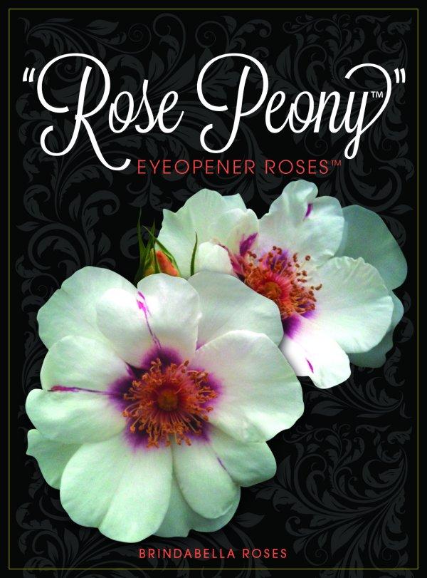 RosePeony_HR