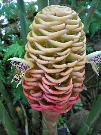 The Weird And The Wonderful Crazy Amazing Plants