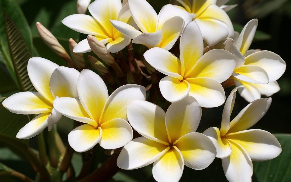 Pretty but poisonous flowers to avoid in diy cake making image what com flowers mightylinksfo